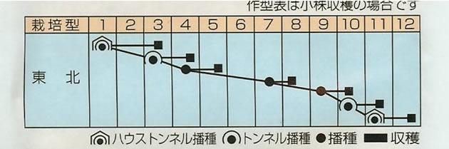 からし菜 種 リアスからし菜(20ml)