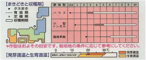 ナス種 みず茄(30粒)~タキイ交配~