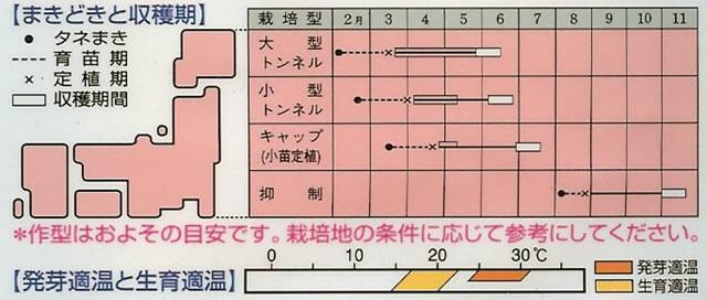 カボチャ種はやと(22粒)~タキイ交配~