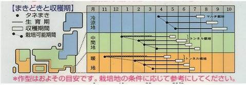 にんじん 種 いなり五寸(9ml)