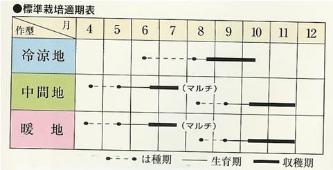 ダイコン種 夏つかさ(2dl)