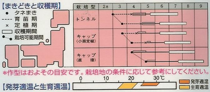 ズッキーニ種 ダイナー(つるなしカボチャ)(15粒)