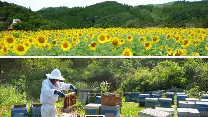 自家採蜜の国産蜂蜜