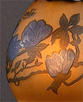 Magnolia(木蓮)