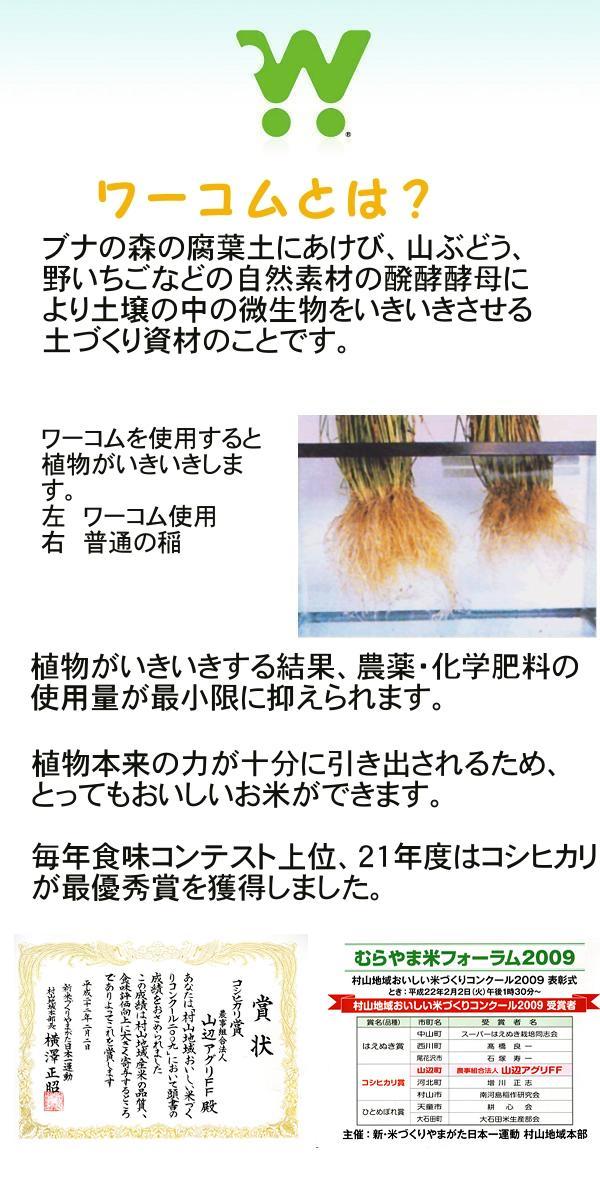 29年産 特別栽培米山形県産コシヒカリ玄米25kg 【精米方法自由:分づき米(胚芽米)・無洗米・白米・玄米】 【30kg商品からかわりました】