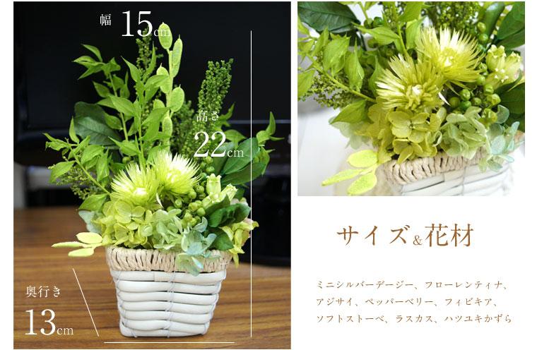 ミニ観賞植物 サイズ
