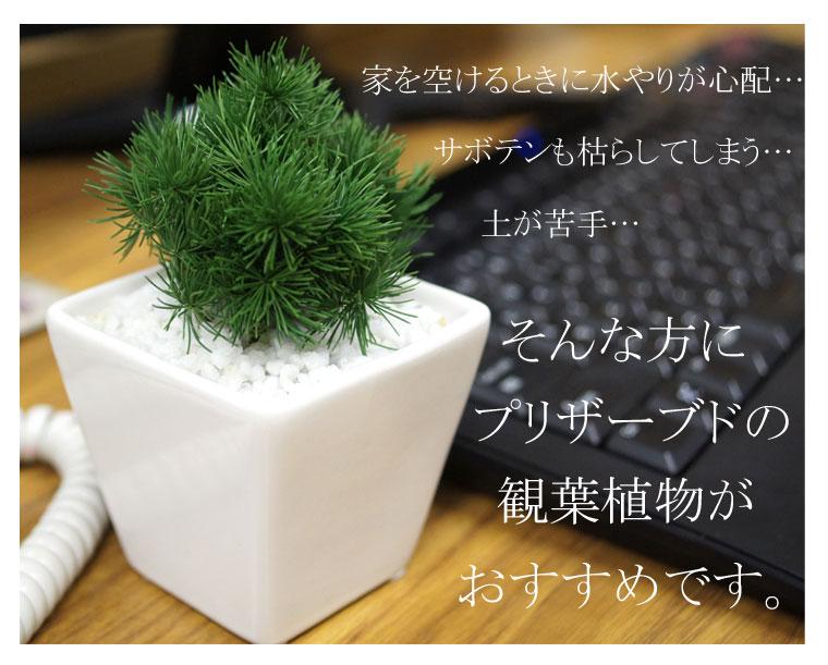 インテリアグリーン。ミニ観賞植物