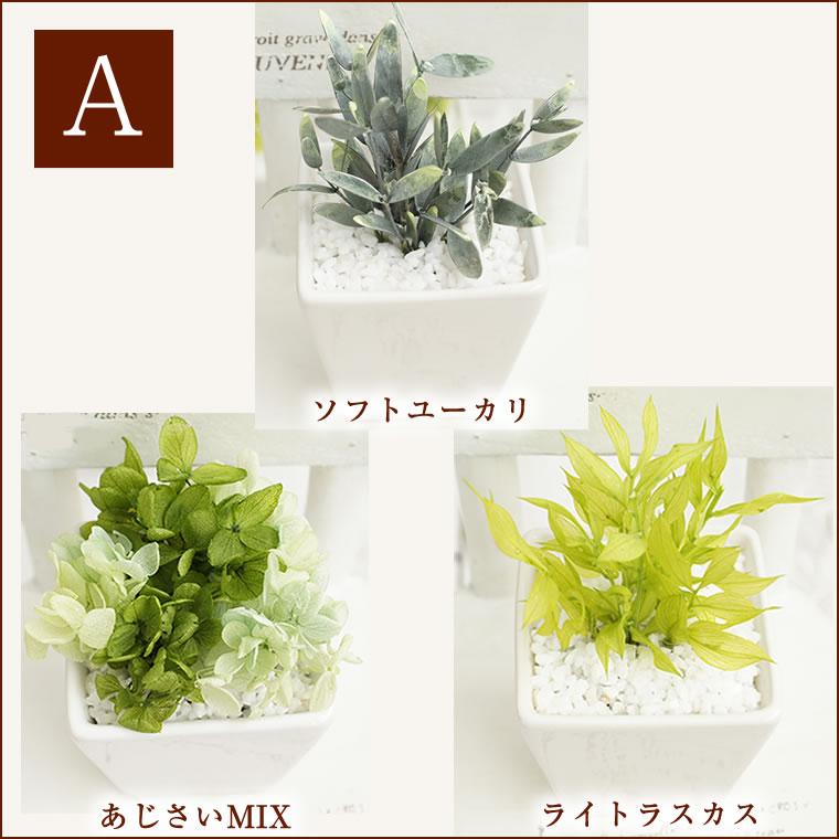 父の日。インテリアグリーン。ミニ観賞植物