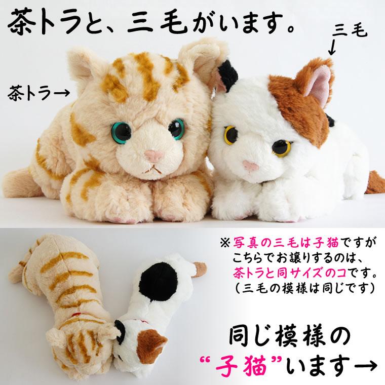 茶トラ・三毛、子猫はこちら