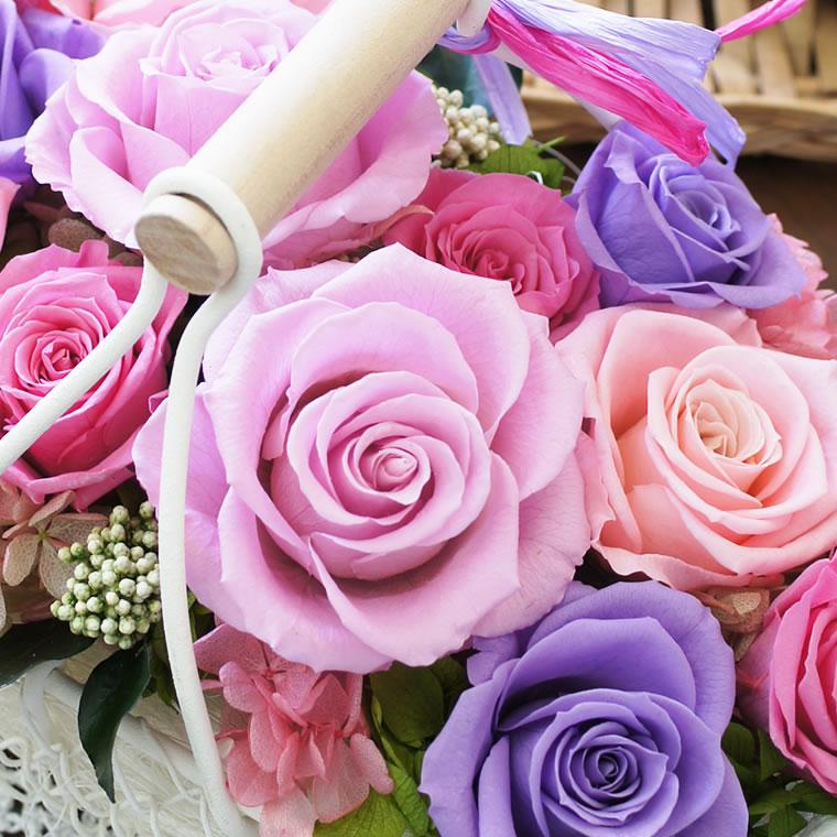 色とりどりのピンクローズ