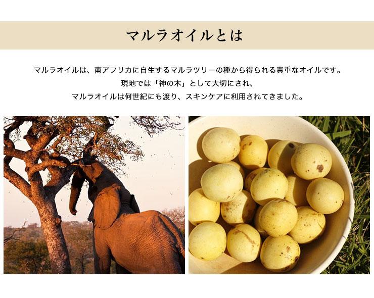 マルラオイルとは。マルラオイルは、南アフリカに自生するマルラツリーの種から得られる貴重なオイルです。現地では「神の木」として大切にされ、マルラオイルは何世紀にもわたり、スキンケアに利用されてきました。