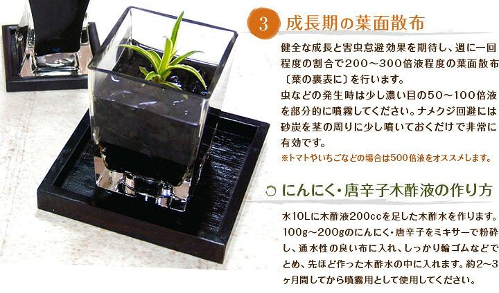 成長期の葉面散布,にんにく・唐辛子木酢液の作り方