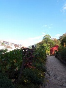 モンマルトルのブドウの収穫祭