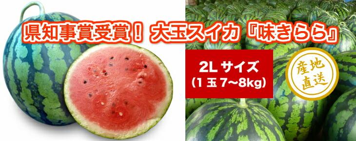 千葉県富里産大玉スイカ2Lサイズ