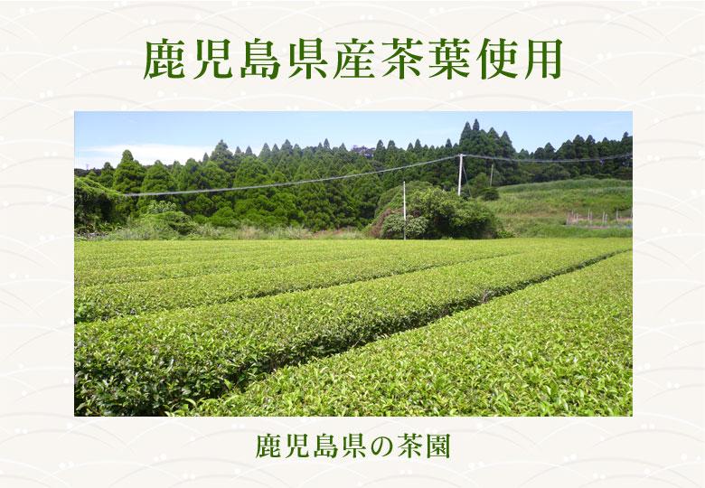 鹿児島県産茶葉使用 鹿児島県の茶園