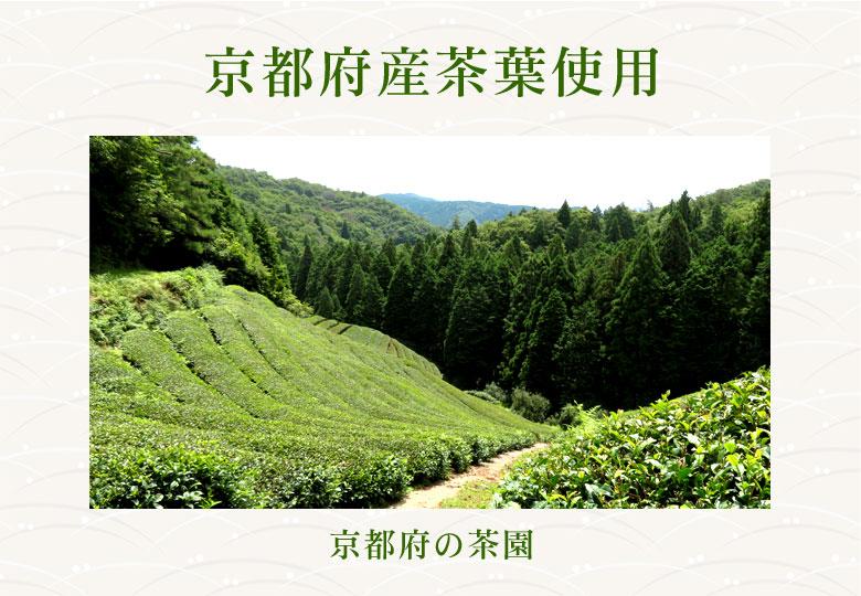 京都府産茶葉使用 京都府の茶園