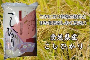 愛媛県産こしひかり10kg