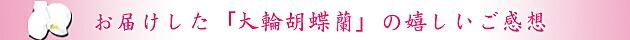 贈答用の胡蝶蘭をお受け取りになったお客様の直筆メッセージです