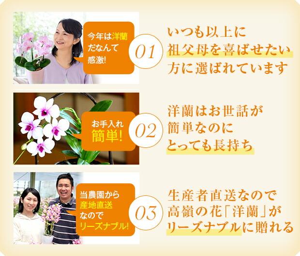 敬老の日に森水木の洋蘭が選ばれる3つの理由