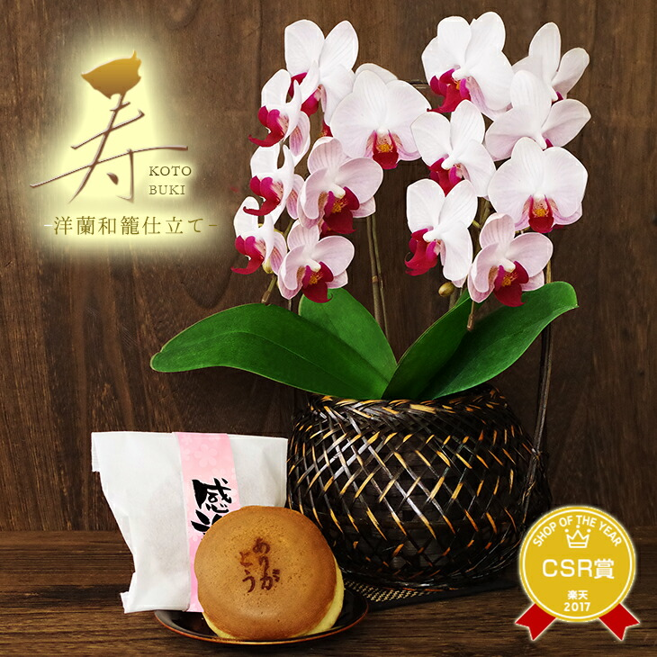 敬老の日 和風胡蝶蘭 受賞品種
