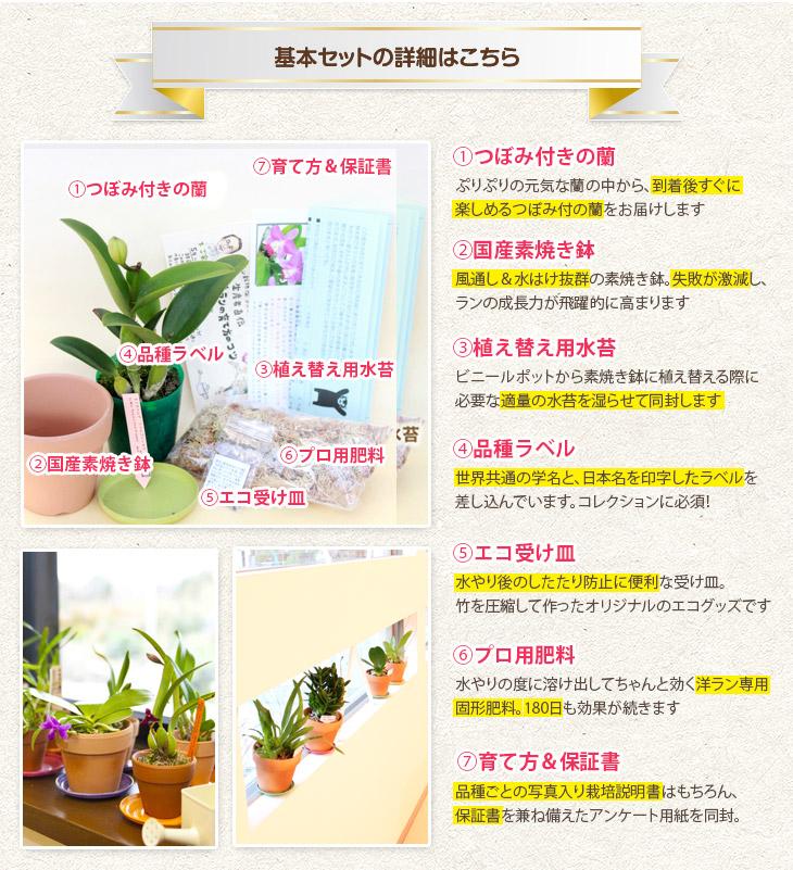 胡蝶 蘭 の 育て 方