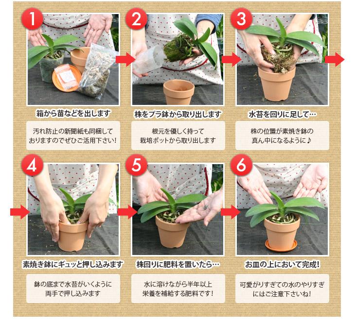 洋蘭 植え替え