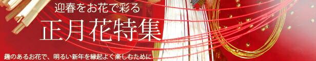 お正月特集・迎春花