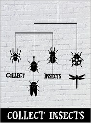 collect-insects