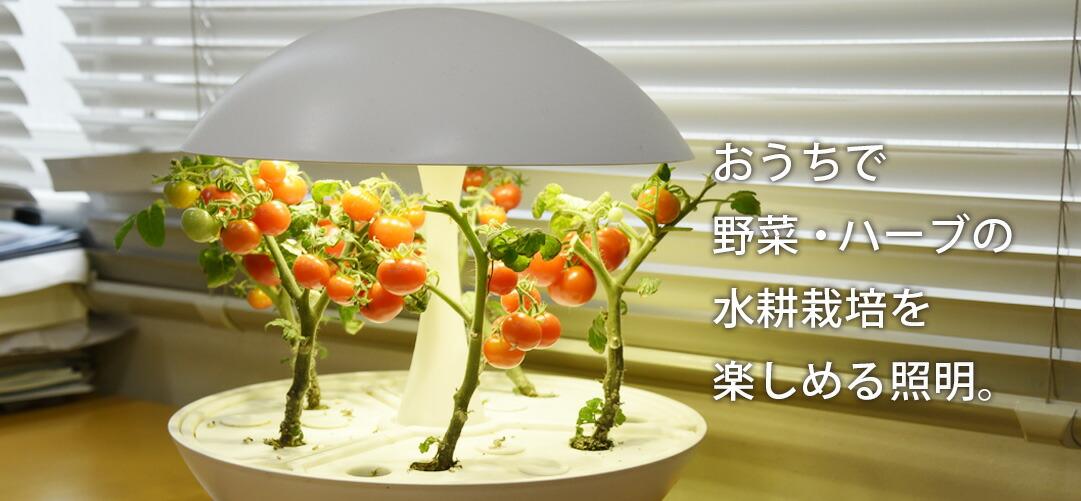 水耕栽培できるLEDライト