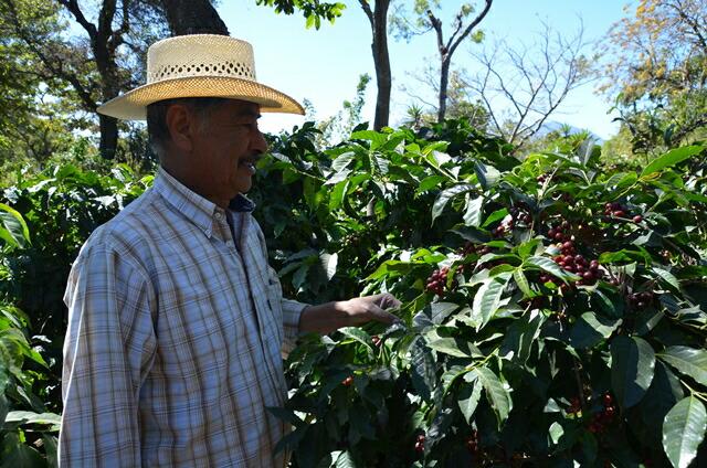 グァテマラ/ラ・トラベシア農園