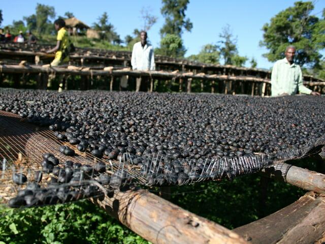 エチオピア/サワナ農園ナチュラル