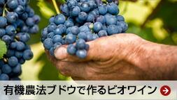 ビオワイン 有機農法