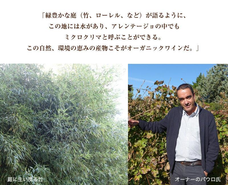 ゼブロ・アモレイラ・ダ・トーレ・ビオワイン