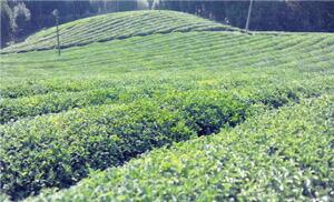 無農薬・自然農のワイルドクラフト原料