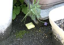花壇においてナメクジ駆除 ナメクジカダン