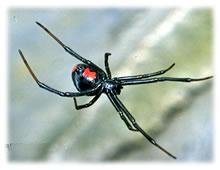 クモの巣消滅ジェット セアカゴケグモ