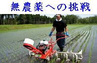 無農薬栽培への挑戦