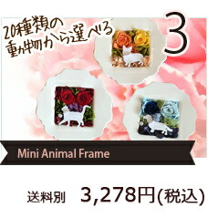 Mini Animal Frame