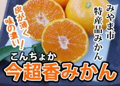 今超香(こんちょか)みかん みやま市特産品