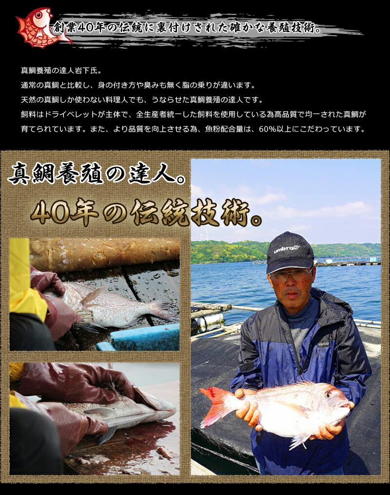 仮屋湾の真鯛昆布〆炙り2セット