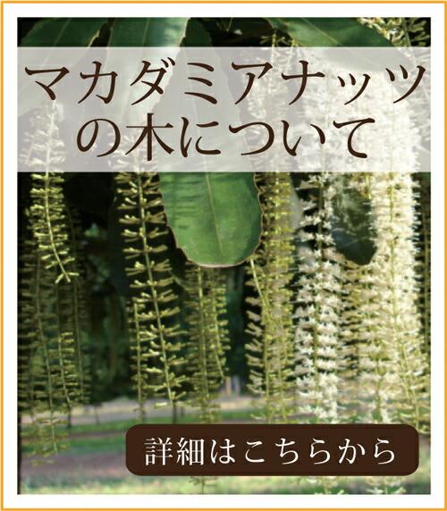 自然派健康食品なふりショップ マカダミアナッツの木について