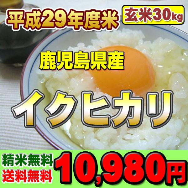 イクヒカリ玄米30k