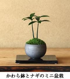 ナギモダン盆栽