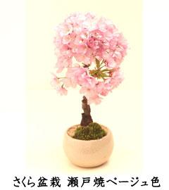 花梅ミニ盆栽