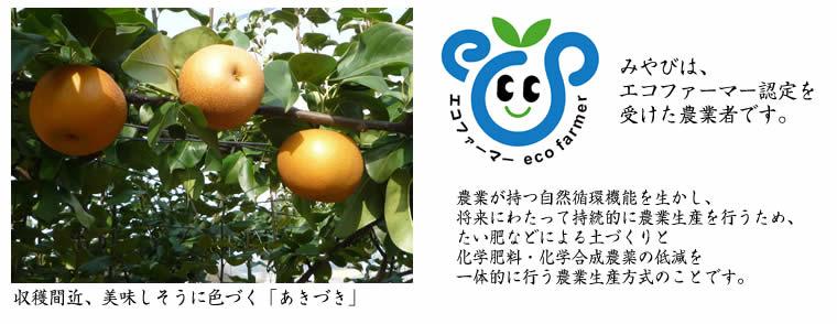 エコファーマー あきづき 梨