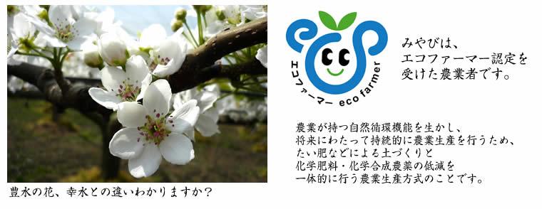 豊水の花 エコファーマー
