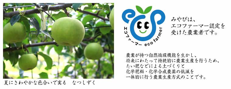 エコファーマー なつしずく 和梨