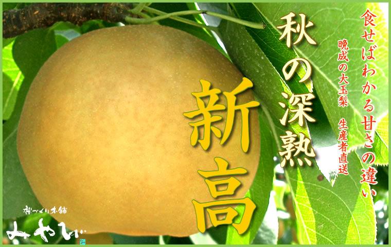 新高 梨 新種 豊水と新高と幸水を併せた