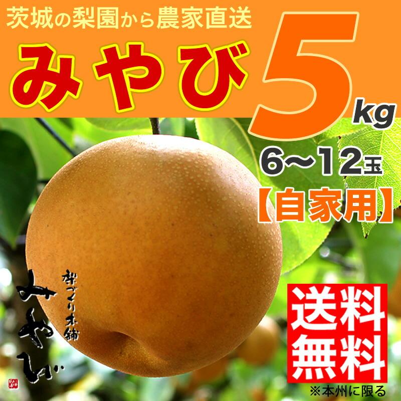 みやび にっこり 梨 送料無料 5kg 和梨 茨城産 訳あり 自家用