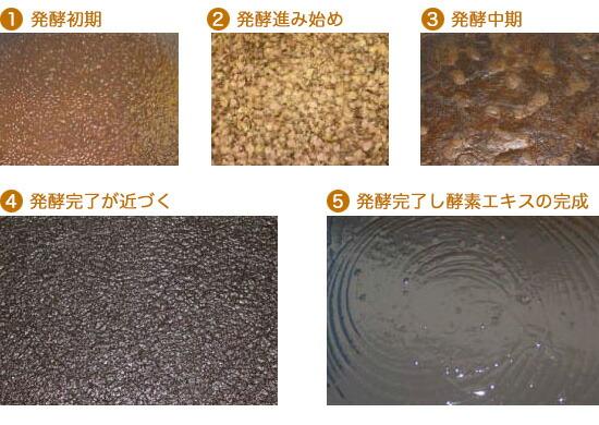 発酵の過程